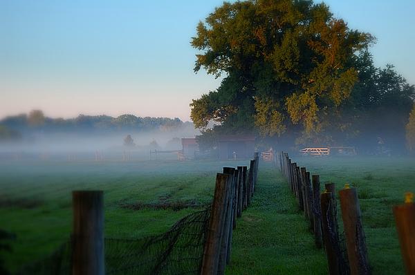 James DeFazio - Misty Morning Sunrise