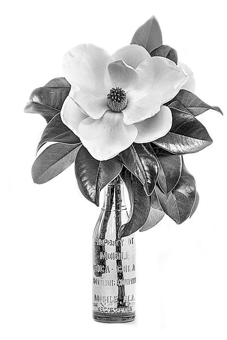 JC Findley - Mobile Magnolia Black and White