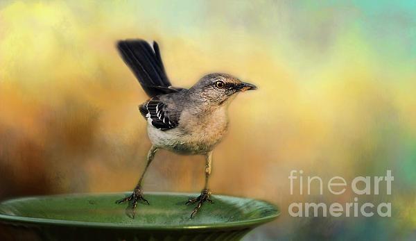 Darren Fisher - Mockingbird