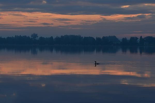 Viktoriya Sorochuk - Morning Duck