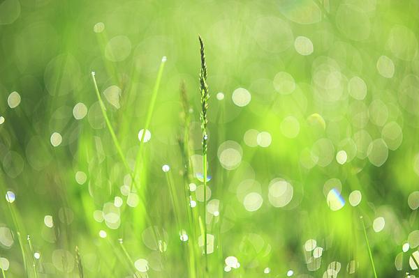 Jenny Rainbow - Morning Fairies. Green World