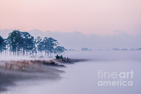 Tom Claud - Morning Fog at Pine Glades