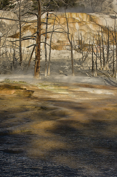 Sandra Bronstein - Morning Light On  Mammoth Terrace
