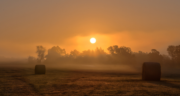 Ron  McGinnis - Morning On The Farm