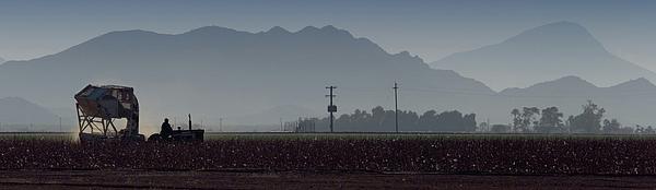Morning On The Farm Photograph