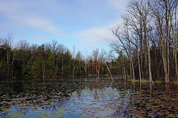 Debbie Oppermann - Morning Spring Pond