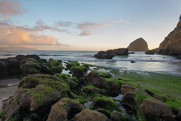 Paul Quinn - Mossy rocks at the beach