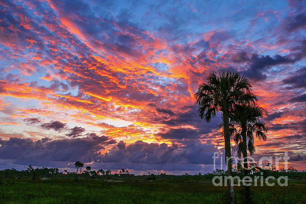 Tom Claud - Multi-Colored Sunrise