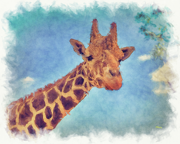 John M Bailey - My Friend The Giraffe