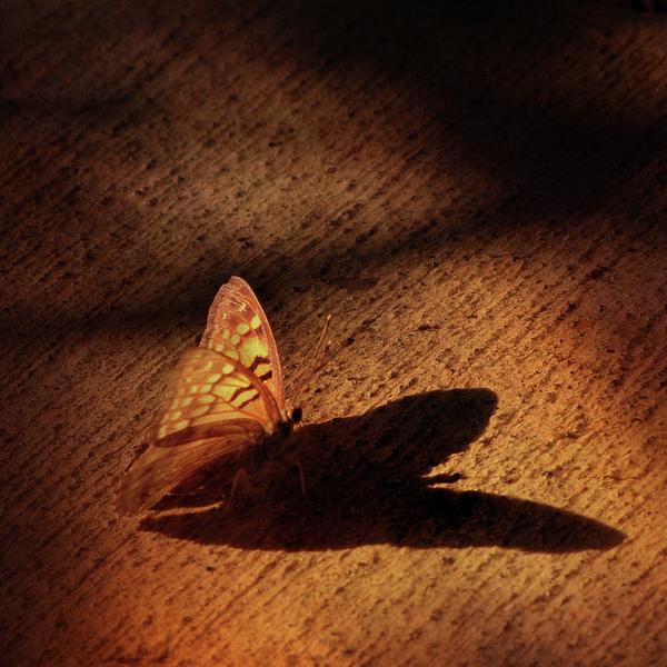 Amy Tyler - My Shadow