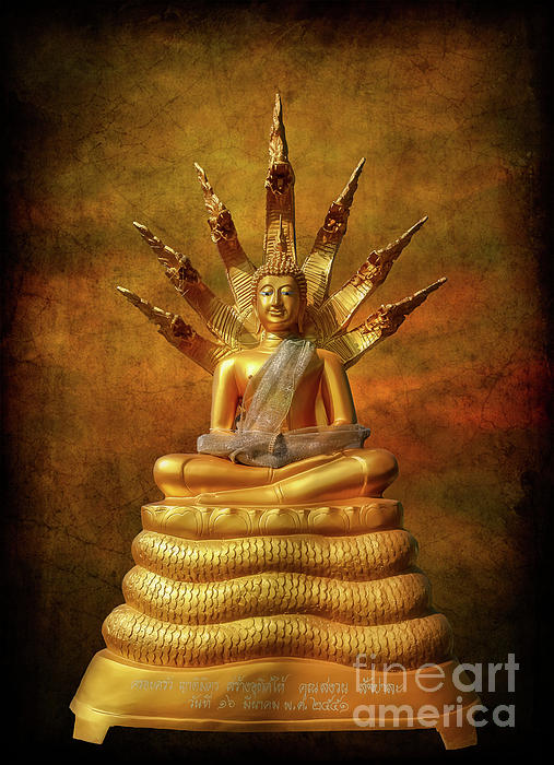 Adrian Evans - Naga Buddha