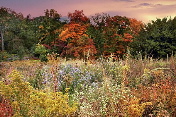 Jessica Jenney - Native Garden Sunset