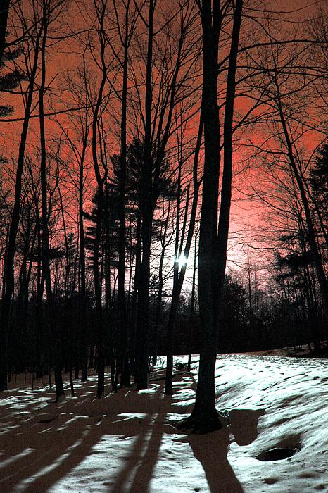 Mark Ashkenazi - Nature Of Wood