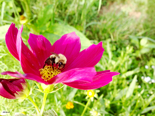 Debra Lynch - Nectar For The Honeybees