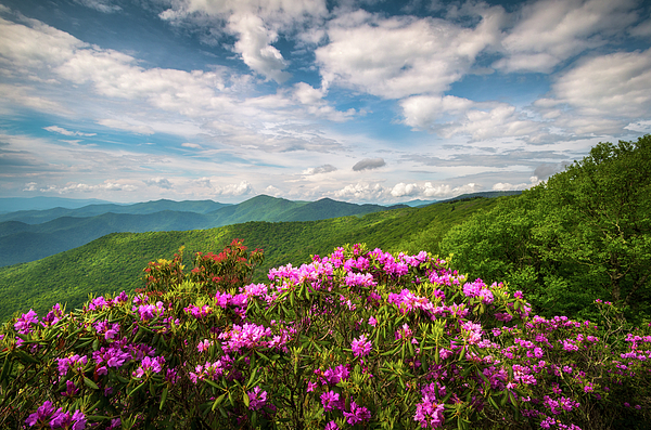 North Carolina Spring Flowers Mountain Landscape Blue Ridge Parkway Asheville Nc Beach Towel