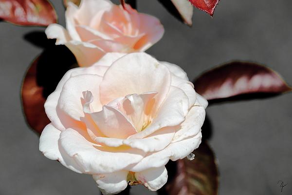 Debra Larabee - Not So Neutral Rose