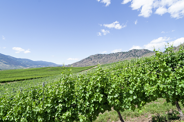 Bob Corson - Okanagan Valley wine country