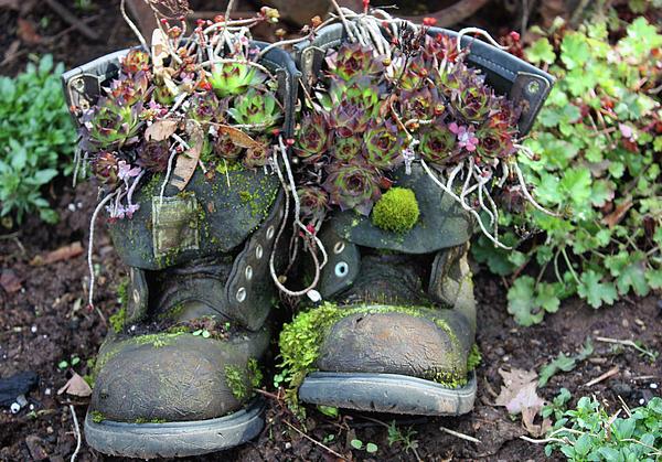 Kami McKeon - Old Boots New Purpose