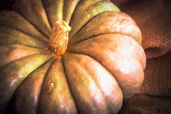 Nancy Forehand Photography - Old Sage Pumpkin