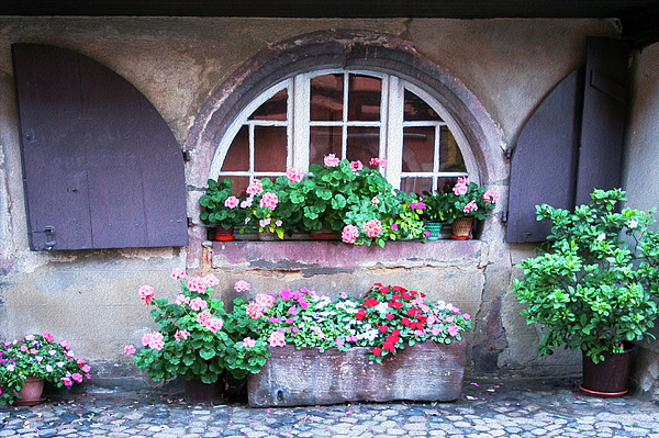 Amy Sorvillo - Old World Charm in Alsace France