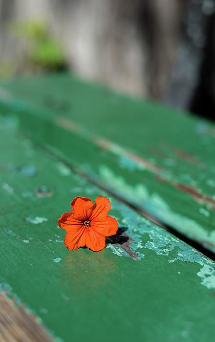 Carol Lloyd - On the Bench