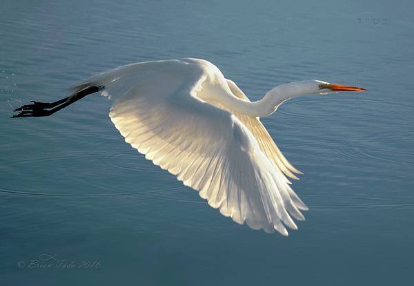 Brian Tada - On Wings of Splendor