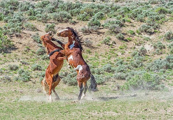 Teresa Jack - One Two Punch Horses at Sandwash Basin