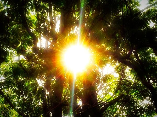 Debra Lynch - One Warm Afternoon In The Sun
