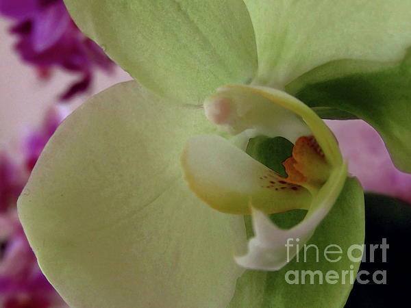 Kim Tran - Orchids Love - Macro 3