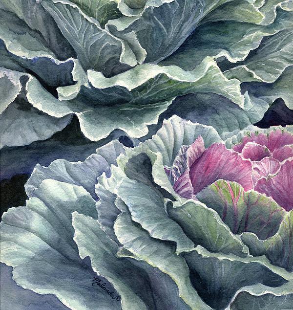 Malanda Warner - Ornamental Cabbage