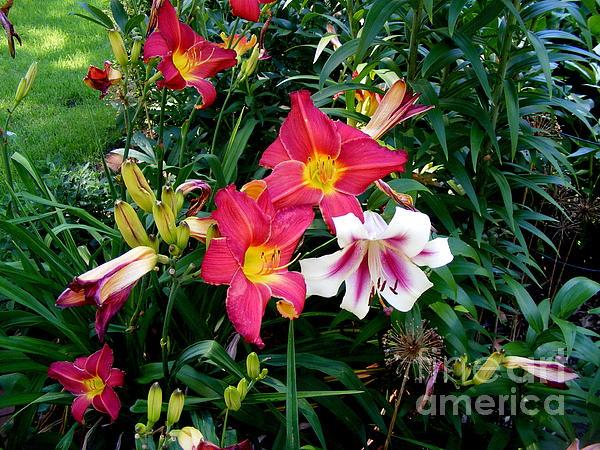 Nancy Kane Chapman - Outdoor Bouquet