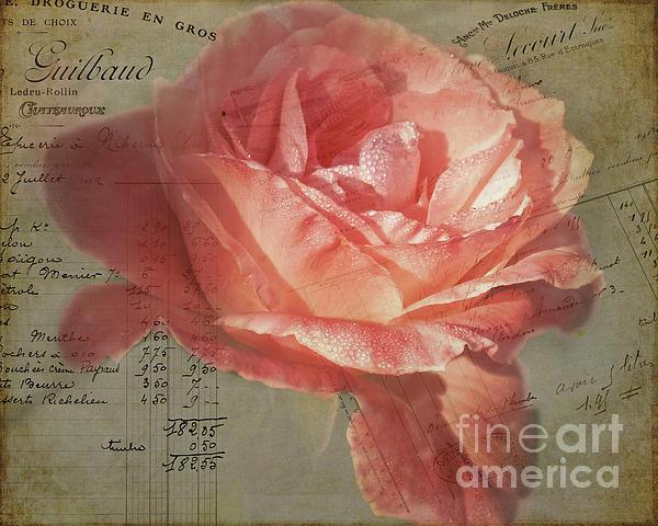 TN Fairey - Painted Rose