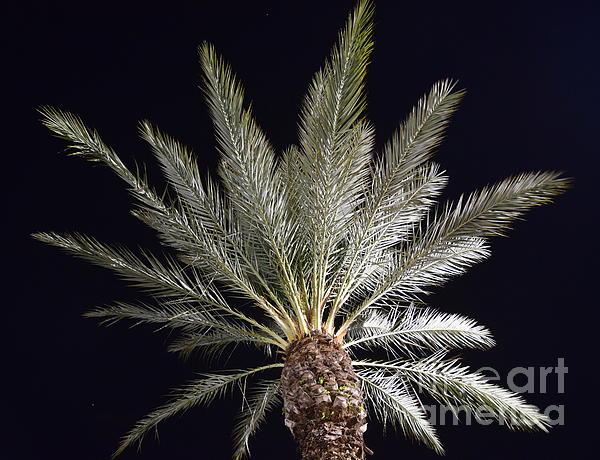 Agnes Lankus - Palm at Night