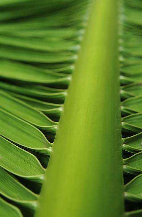Heidi Fickinger - Palm Frond as Architecture
