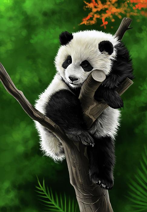 Amit Baokar - Panda