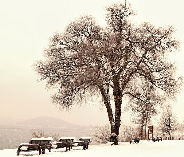 Jeff Swan - Park Benches in snowfall