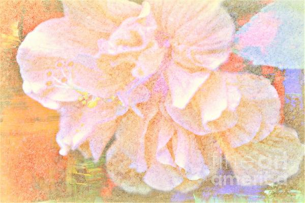Diann Fisher - Pastel Hibiscus