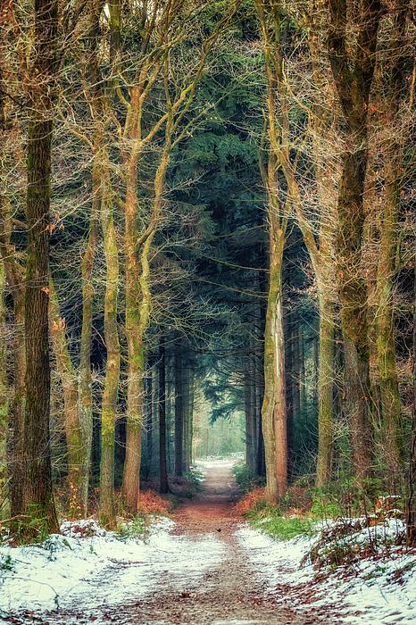 Tim Abeln - Path through Bergherbos