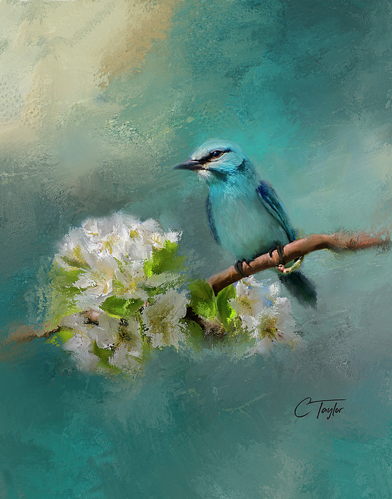Colleen Taylor - Peaceful Symphony