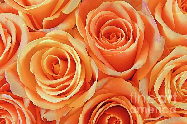 Regina Geoghan - Peach Perfection Rose Bouquet