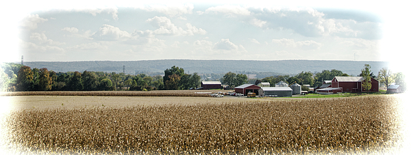 Eleanor Bortnick - Pennsylvania Farmland