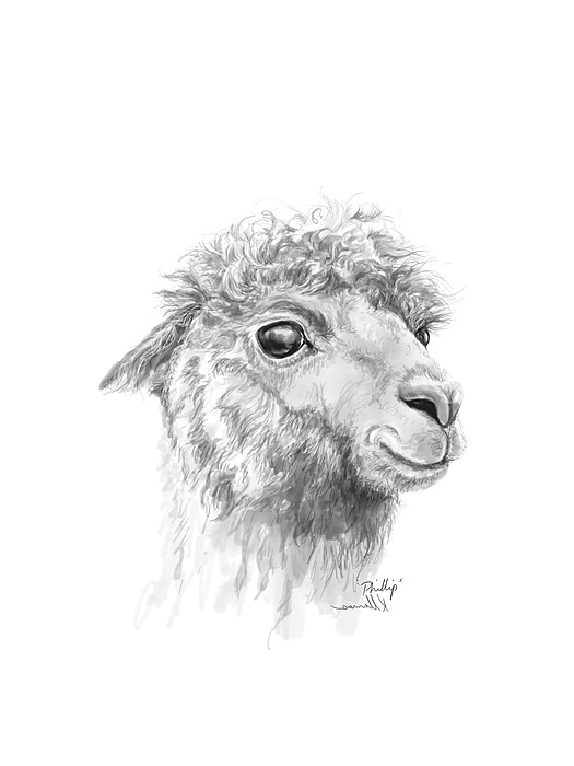 Phillip Drawing