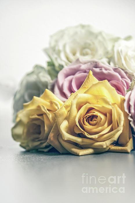 Chellie Bock - Pile of Roses