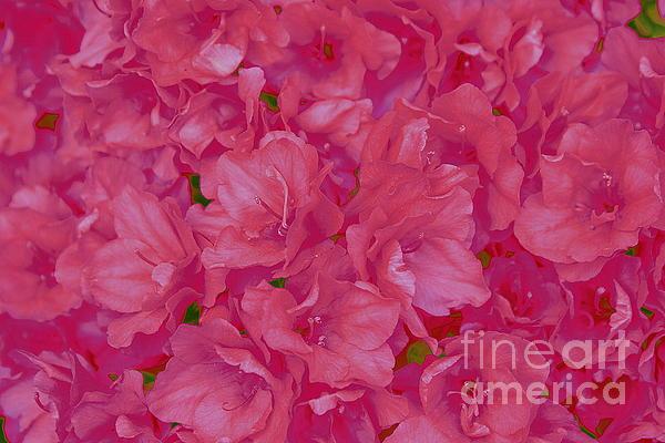 Dora Sofia Caputo Photographic Art and Design - Pink Azaleas Pop Art
