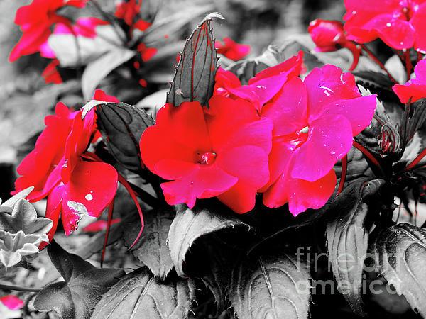 Maria Fiorenza Orlando - Pink Flowers
