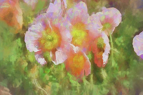 Linda Brody - Pink Poppies 2 Impression