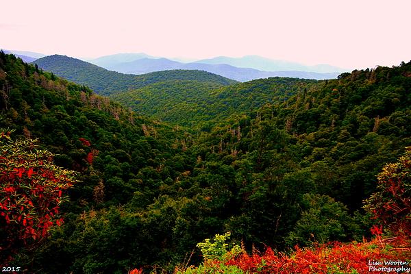 Lisa Wooten - Pisgah National Forest NC