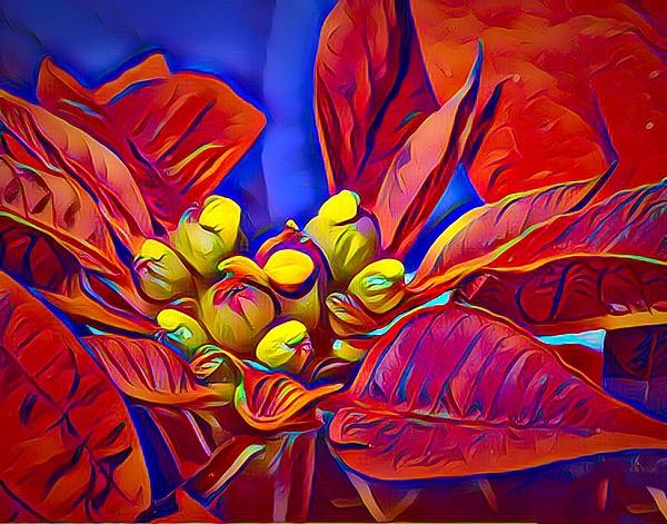 Anne Sands - Poinsettia Closeup