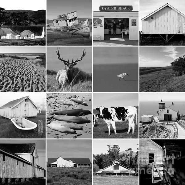 San Francisco Bay Area Art And Photography Artist Website