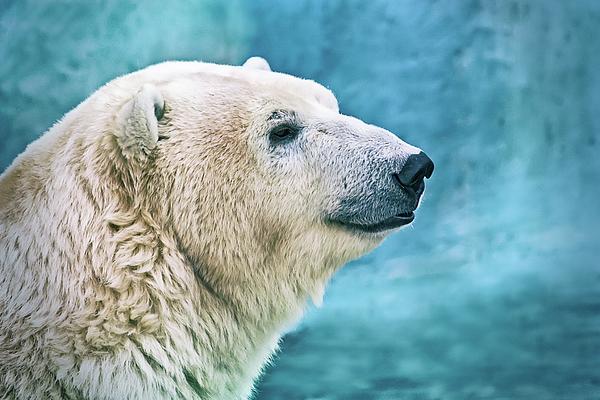 Oksana Ariskina - Polar Bear